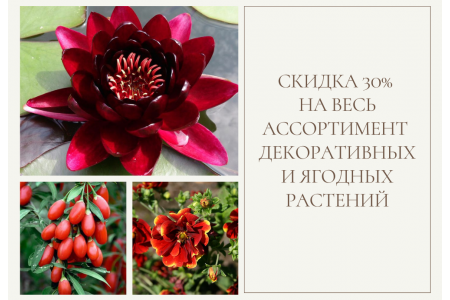 Уникальное предложение осени! Распродажа декоративных и ягодных растений! -30% до 20.11.21 !