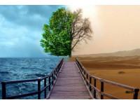 Растения в условиях изменения климата