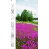 Смолка обыкновенная (Lychnis viscaria)